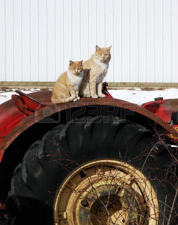 2792274-two-orange-cats-pose-on-top-of-a-tractor-a-serene-farm-photo